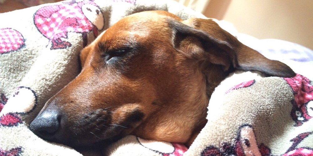 Come Proteggere il Cane Bassotto dal Freddo